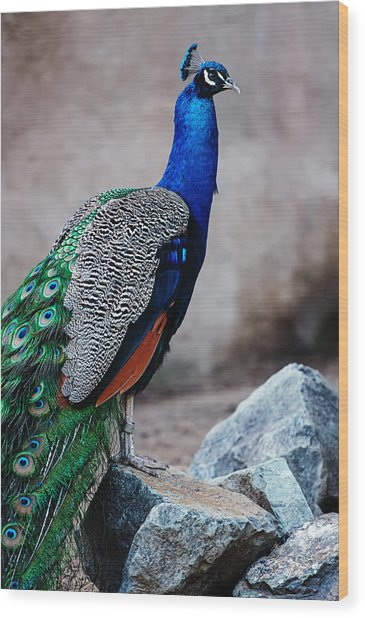 Peacock - National Bird Of India Wood Print