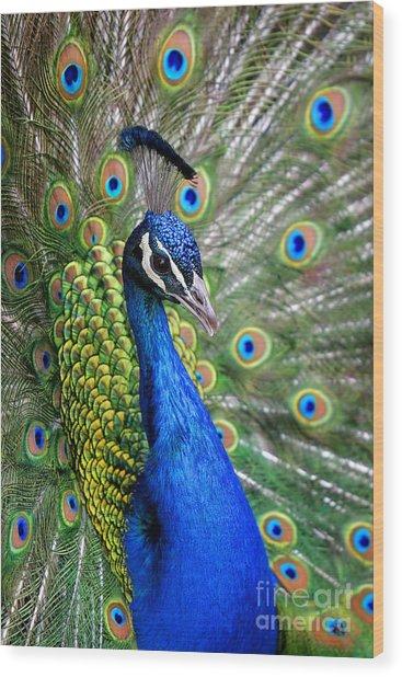 Peacock On Display Wood Print
