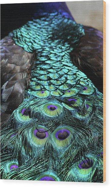 Peacock Trail Wood Print