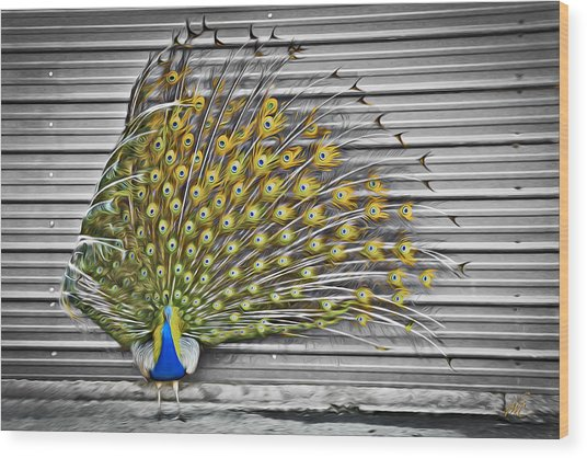 Peacock Wood Print by Williams-Cairns Photography LLC