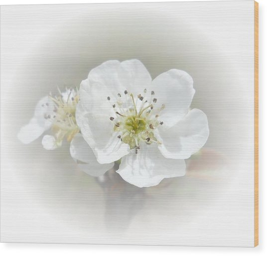 Wood Print featuring the photograph Pear Blossom by Judy Hall-Folde