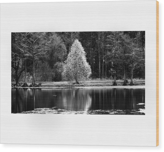 Pear Tree Wood Print by Jerry Cook