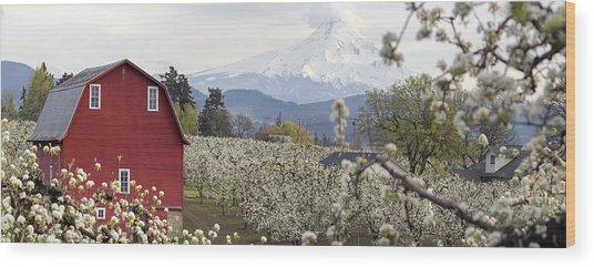 Pear Tree Orchard In Hood River Oregon Wood Print