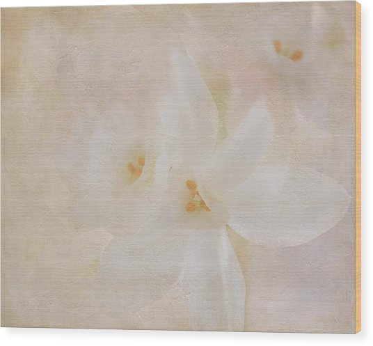 Pearl On Petals Wood Print