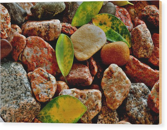 Pebbles And Leaves Wood Print