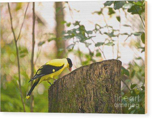 Pecking Away Wood Print
