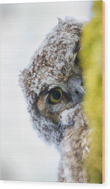 Peek A Boo Baby Owl Wood Print