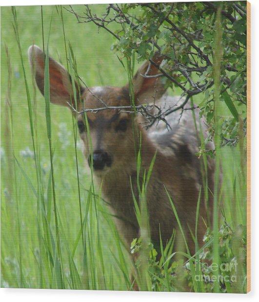 Playing Peek A Boo In Evergreen Colorado Wood Print