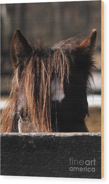 Peek-a-boo Pony Wood Print