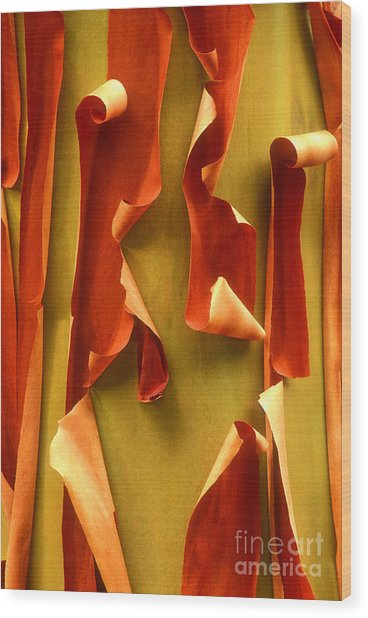 Peeling Bark Pacific Madrone Tree Washington Wood Print