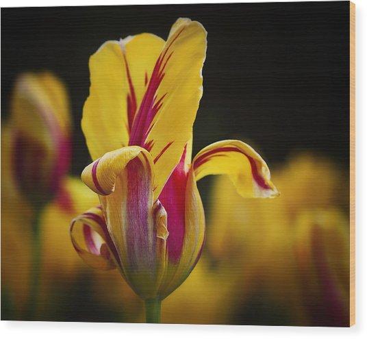 Peeling Tulip Wood Print