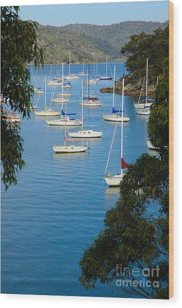 Peeping Through The Trees - Yachts Moored In A Quiet River Wood Print