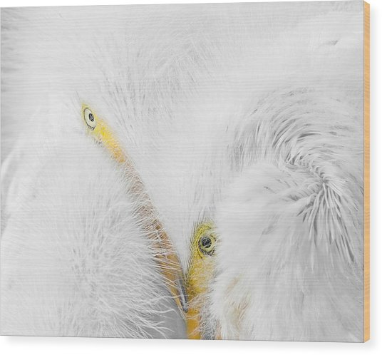 Peering Thru Feathers Wood Print
