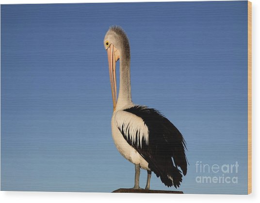 Pelican Alone Wood Print