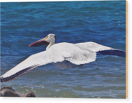 Pelican At Pyramid Lake Wood Print