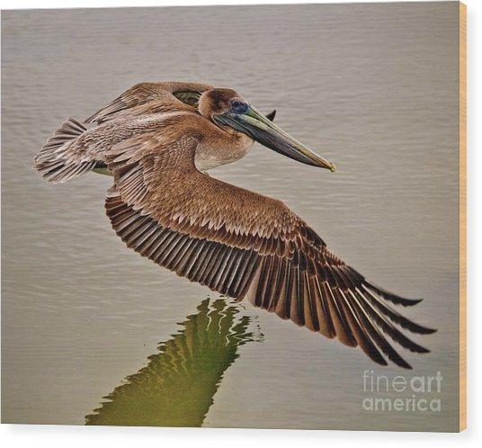 Pelican Cruise Wood Print