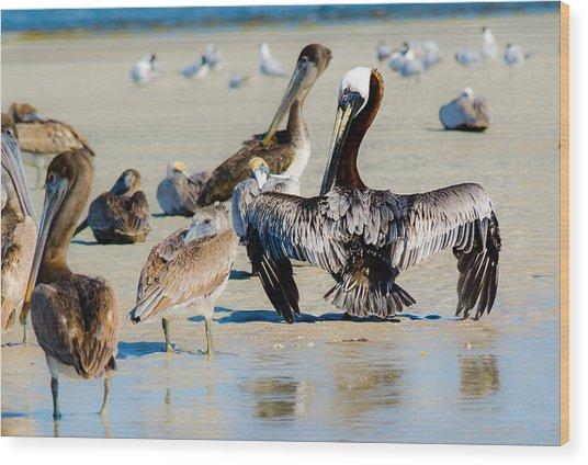 Pelican Drying Wood Print