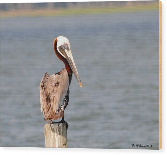 Pelican Eyes The Photographer Wood Print