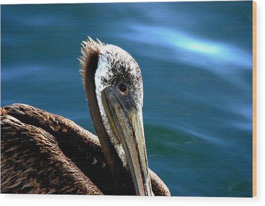 Pelican Eyes Wood Print