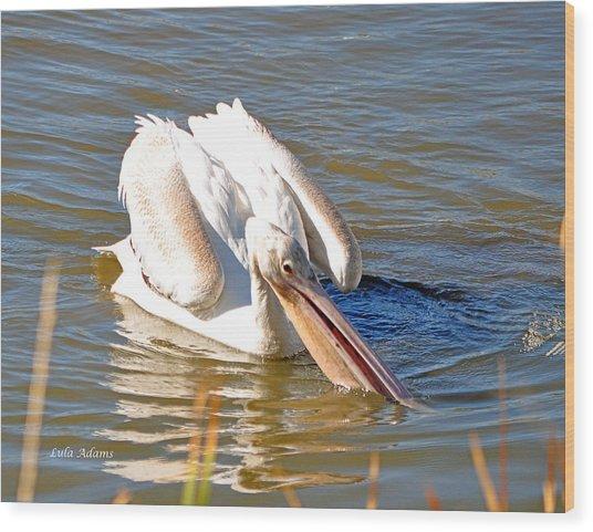 Pelican Fishing Wood Print