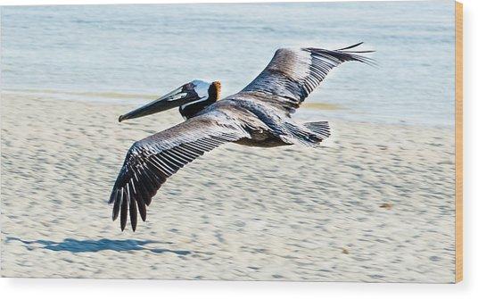Pelican Flying Wood Print