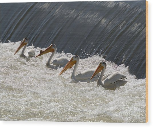 Pelican Four Wood Print