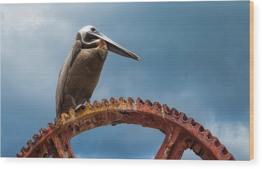 Pelican In St. Croix Wood Print