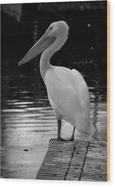 Pelican In The Dark Wood Print