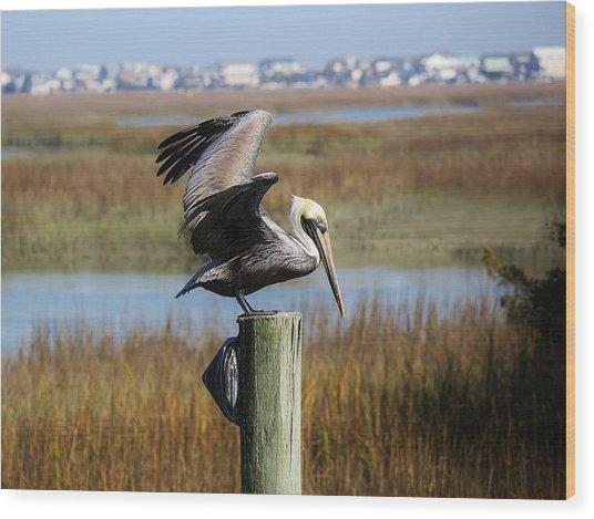 Pelican In The Marsh Wood Print by Paulette Thomas
