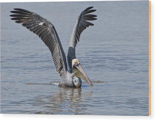 Pelican On Bayou Du Large Wood Print by Bonnie Barry