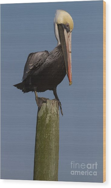 Pelican On Post IIi Wood Print