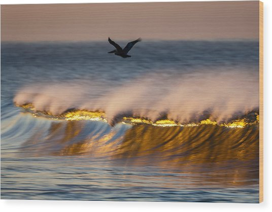 Pelican Over Wave  C6j9351 Wood Print