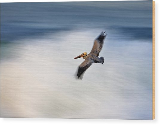 Pelican Over Wave  Mg_1212 Wood Print