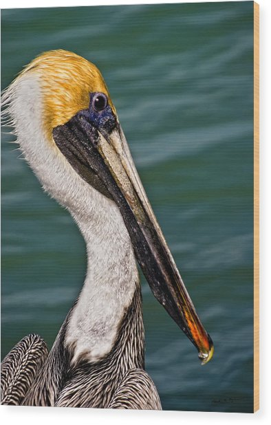 Pelican Profile No.40 Wood Print