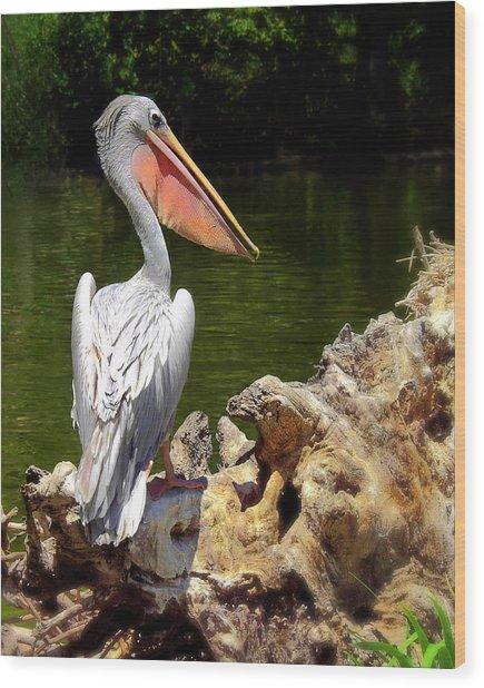 Pelican Proud #2 Wood Print by Wayne Wood