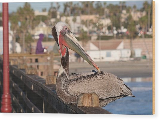 Pelican Sitting On Pier  Wood Print