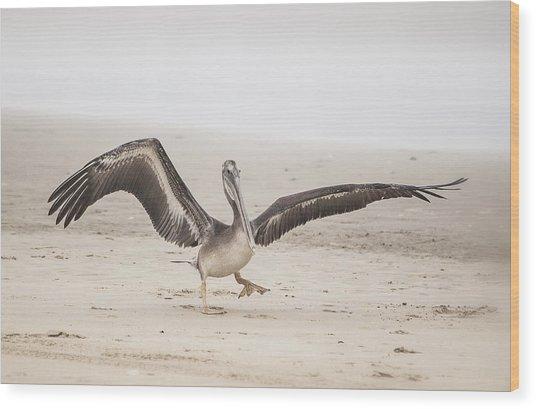 Pelican Strut Wood Print