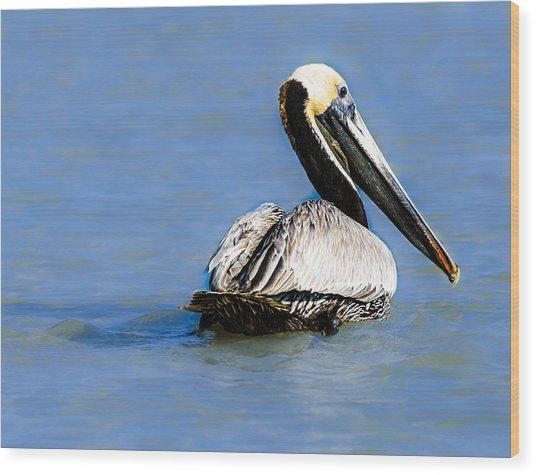 Pelican Swimming Wood Print