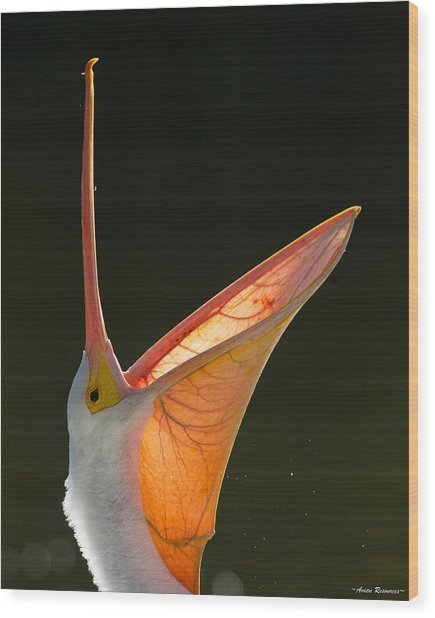 Pelican Yawn 2 Wood Print