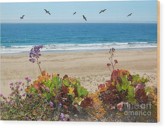 Pelicans And Flowers On Pismo Beach Wood Print