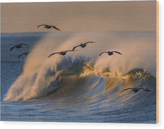 Pelicans And Wave 73a2308-2 Wood Print