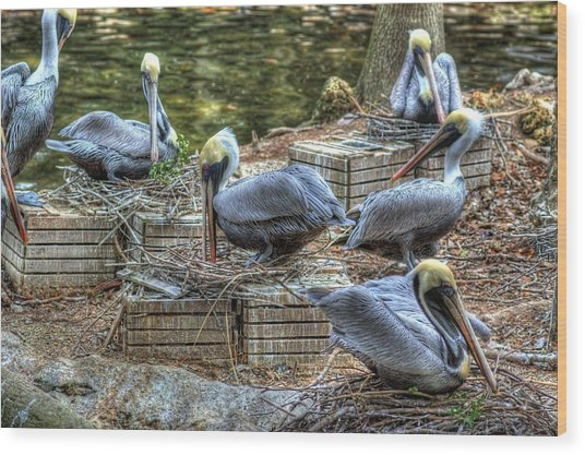 Pelicans By The Dock Wood Print