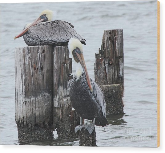 Pelicans Enjoying Lake Ponchartrain Wood Print