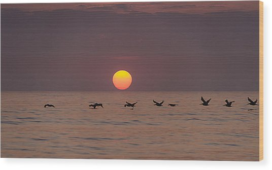 Pelicans In A Row Wood Print by  Island Sunrise and Sunsets Pieter Jordaan