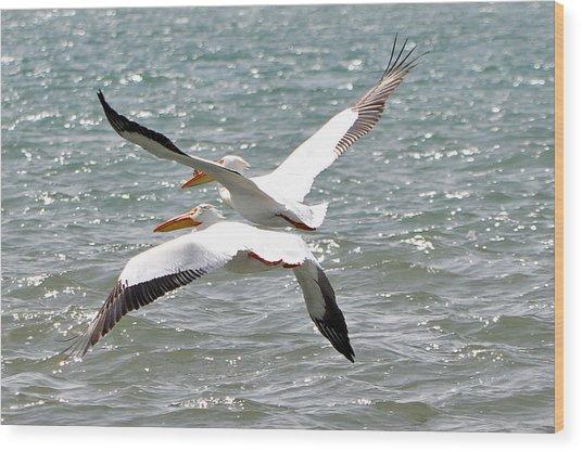 Pelicans In Sync Wood Print