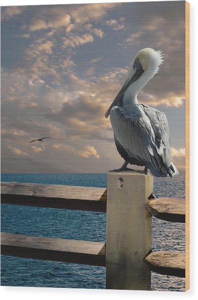 Pelicans Of Tampa Bay Wood Print