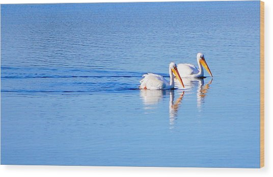 Pelicans On The Bay Wood Print