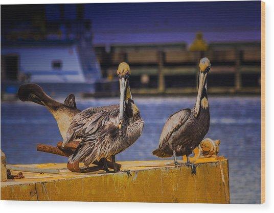 Pelican's Roost Wood Print by Barry Jones