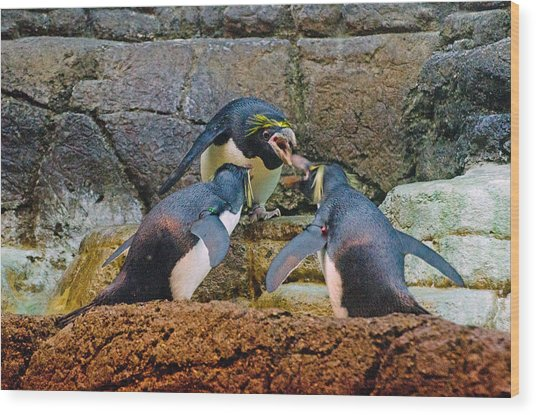 Penguin Talk Wood Print by Cheryl Cencich