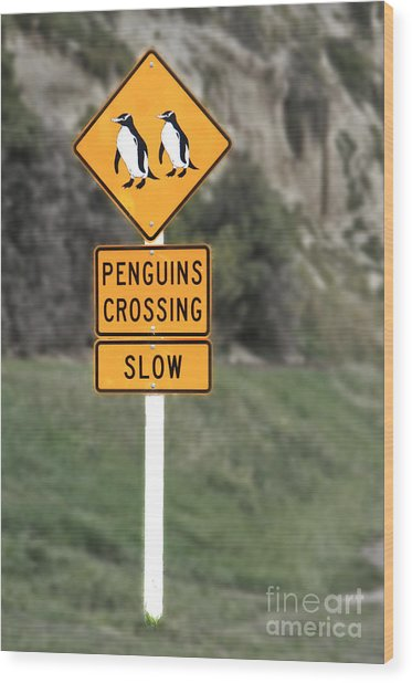 Penguins Crossing Oamaru Wood Print